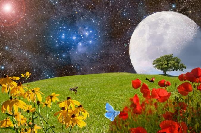 meadow-2401931_960_720